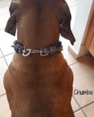 luxus-hundehalsband-leder-in-lila-exklusiv-mit-ohr-tunnel-chumba-1