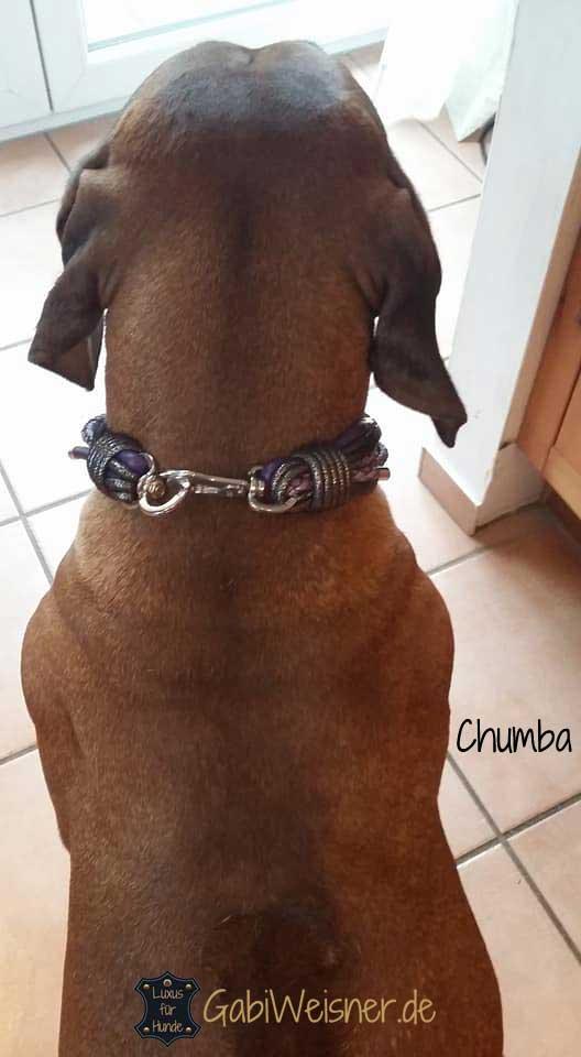 Luxus Hundehalsband Leder in Lila exklusiv mit Ohr Tunnel