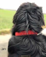 Hundehalsband-Leder-mit-Zugstopp-jaro-rot-1