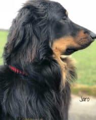 Hundehalsband-Leder-mit-Zugstopp-jaro-rot-3