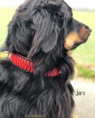Hundehalsband-Leder-mit-Zugstopp-jaro-rot-4