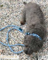 Hundehalsband-und-Leine-Leder-Hellblau-Destiny-1
