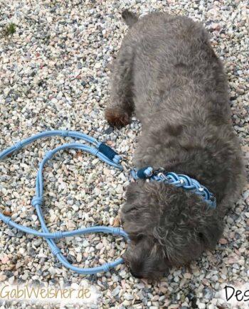 Hundehalsband mit Strass und Leine im SET