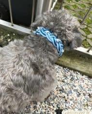 Hundehalsband-und-Leine-Leder-Hellblau-Destiny-3
