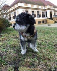 Mini-Hundehalsband-Tina-1