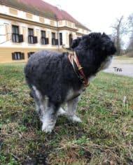 Mini-Hundehalsband-Tina-2