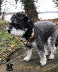 Mini-Hundehalsband-Tina-3