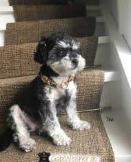 Mini-Hundehalsband-Tina-4