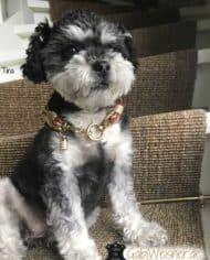 Mini-Hundehalsband-Tina-5