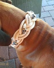 rhodesian-ridgeback-nia-trägt-hundehalsband-breit-geflochten-skull