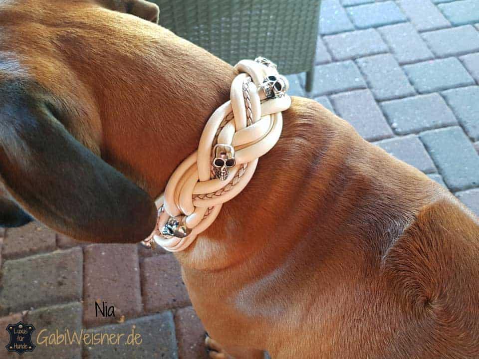 Rhodesian Ridgeback Girl Nia, trägt Hundehalsband breit geflochten