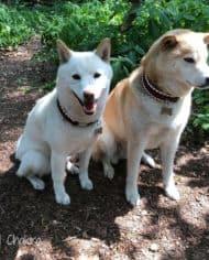 hundehalsband-leder-dunkelrot-3-cm-breit-2