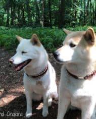 hundehalsband-leder-dunkelrot-3-cm-breit-3