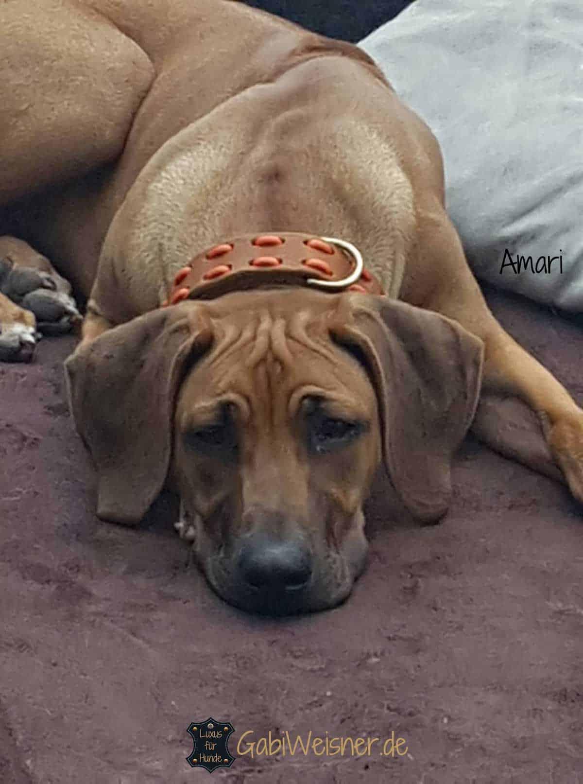 Hundehalsband und Leine aus Fettleder in Cognac