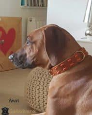Hundehalsband-aus-Fettleder-in-Cognac-Amari-2