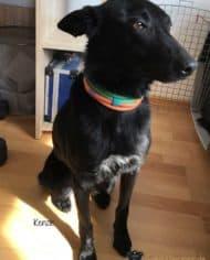 Hundehalsband-Leder-in-Pastellfarben-Kenzie-1