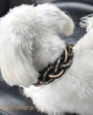 Hundehalsband-Leopard-3-cm-breit-und-leicht-für-kleine-Hunde-3