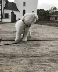 Hundehalsband-Leopard-3-cm-breit-und-leicht-für-kleine-Hunde-6