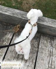 Hundehalsband-Leopard-3-cm-breit-und-leicht-für-kleine-Hunde-8