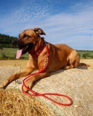 Hundehalsband-und-Leine-Leder-in-Rot-Mila-2