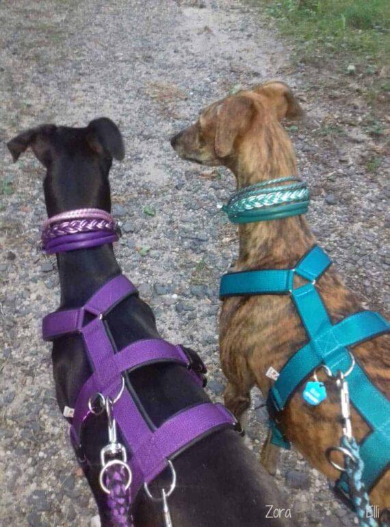 Hundehalsband 5 cm breit Leder Mix in Lila und Flieder