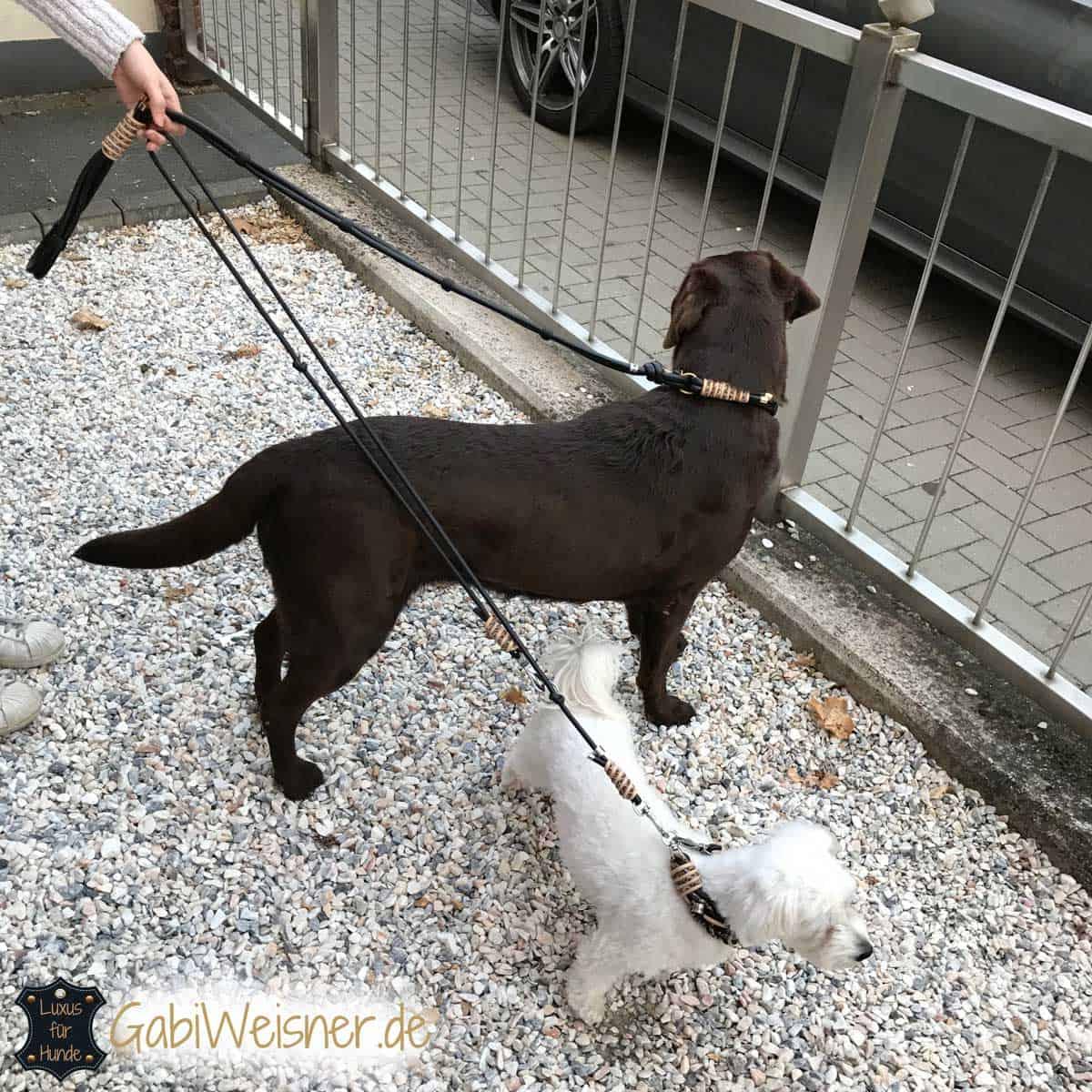Labrador Hundeleine zum Mitwachsen