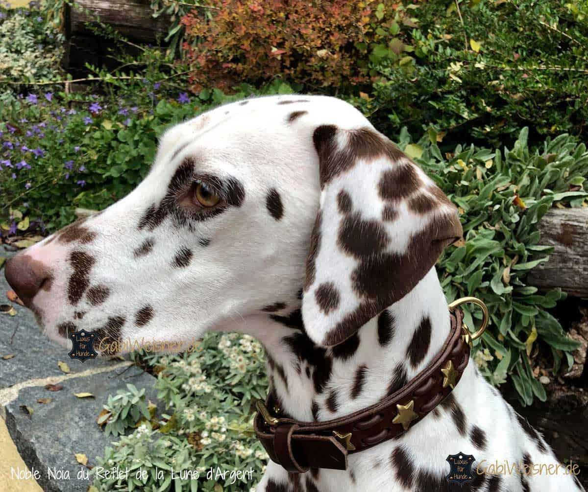 Hundehalsband mit Sternen dekoriert