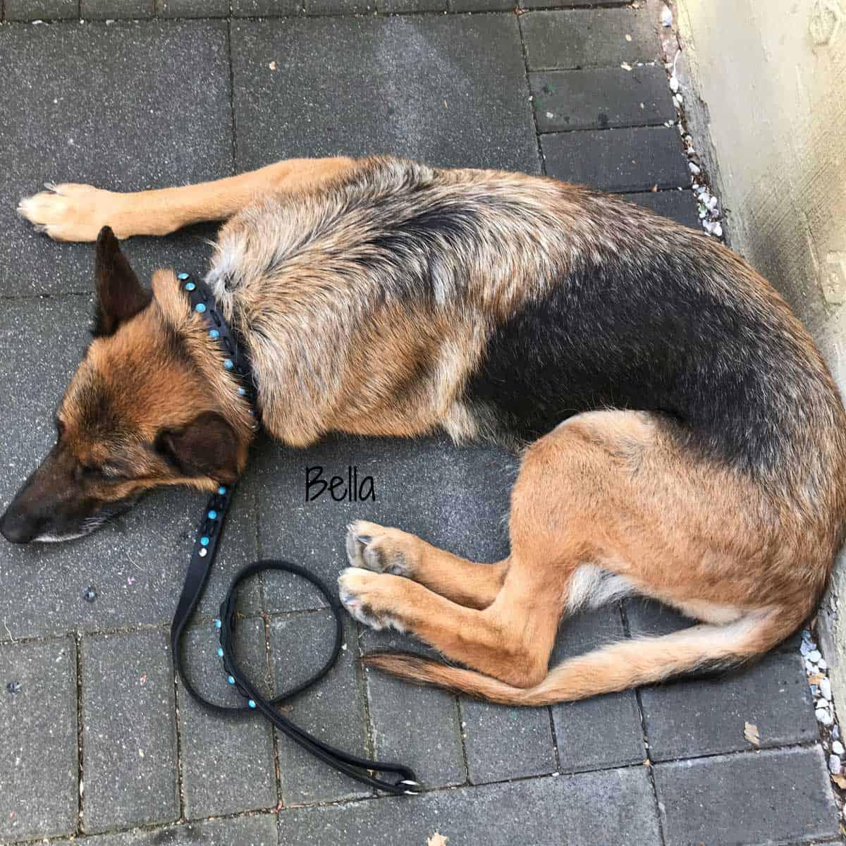 Hundehalsband Zugstopp Fettleder in 3 Farben dekoriert mit Türkisen