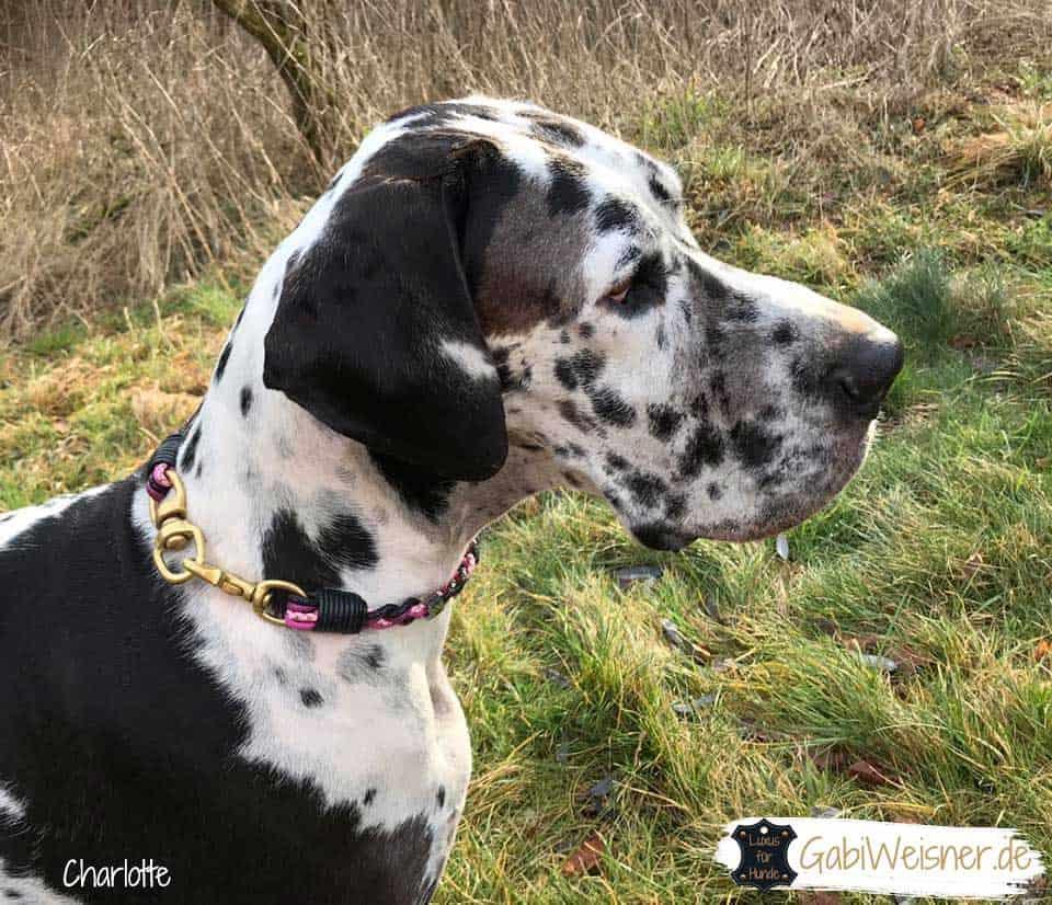 Hundehalsband 2 cm breit