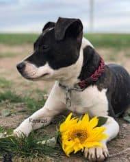 Hundehalsband-2-cm-breit-rapunzel-1