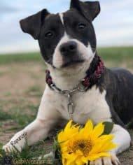 Hundehalsband-2-cm-breit-rapunzel-2
