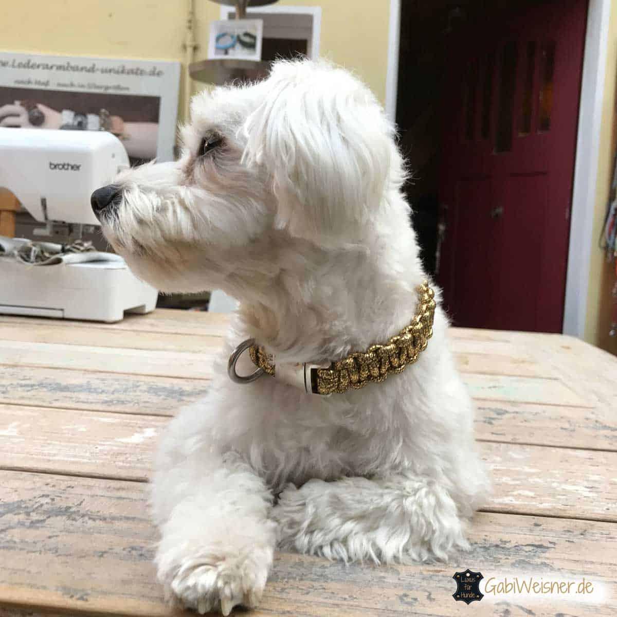 Hundehalsband Mini Goldstück
