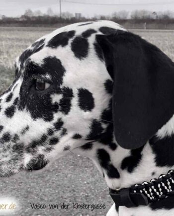 Hundehalsband Leder in Schwarz/Weiß