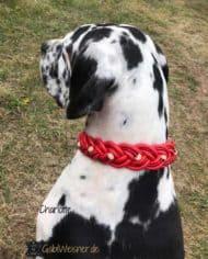 Hundehalsband-weihnachtlich-in-Rot-mit-Strass-und-Gold-Dogge-2