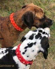 Hundehalsband-weihnachtlich-in-Rot-mit-Strass-und-Gold-Dogge-4