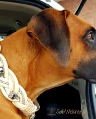 Hundehalsband-Leder-5-cm-breit-geflochten.-Das-Lederbandin-den-Farben-Elfenbein,-Beige,-und-Perlmutt-nia-1