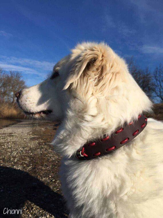 Zugstopp Hundehalsband Leder 4 cm breit für große Hunde