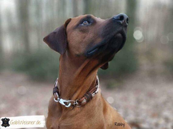 Hundehalsband Leder Mix in Braun