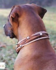 Hundehalsband-Leder-Mix-in-Braun-Perlmutt.-Rhodesian-Ridgeback-Robby-4