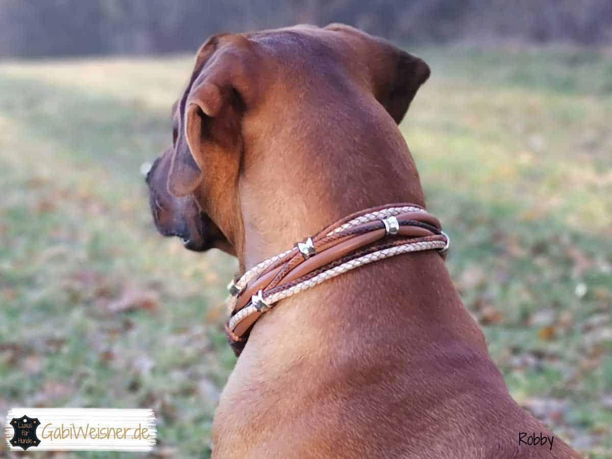 Hundehalsband Leder Mix in Braun Rhodesian Ridgeback