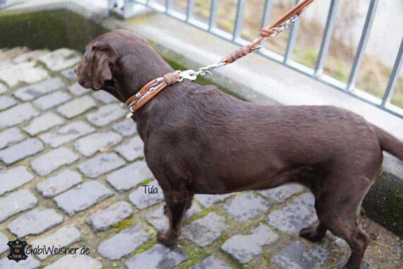 Hundehalsband Leder • exklusive Hundehalsbänder und Leinen. Glückliche Kunden