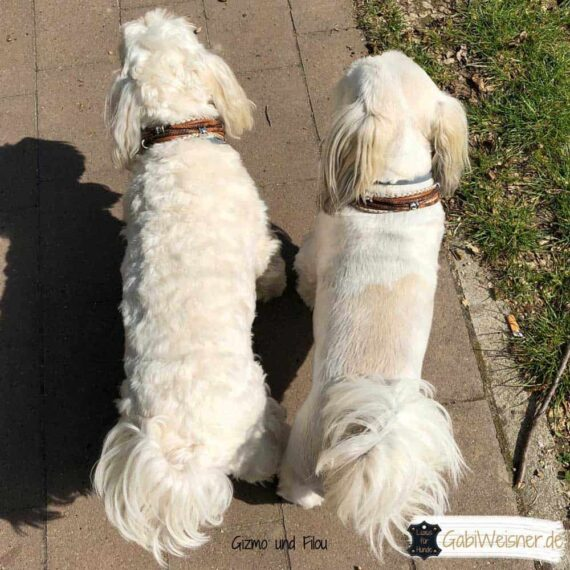 Mini Hundehalsband Leder Mix in Braun Perlmutt