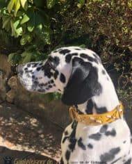 Hundehalsband-Rindsleder-mit-Kreuzen_vasco