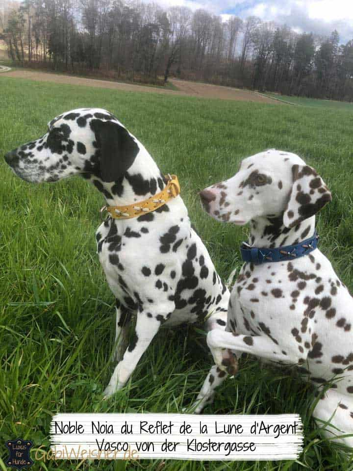 Hundehalsband Rindsleder mit Kreuzen