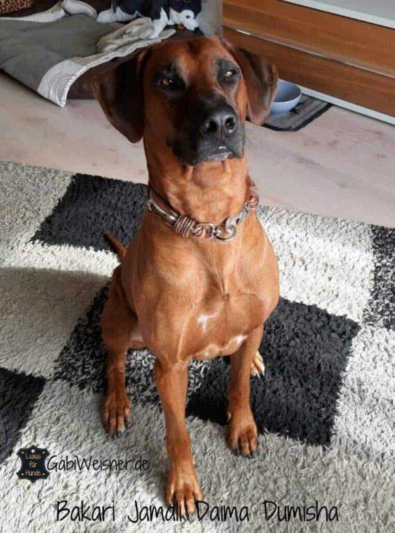 Hundehalsband Leder Mix in Braun Perlmutt