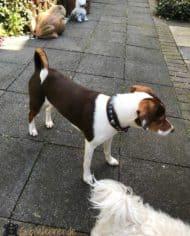 Hundehalsband-3-cm-breit_Leder_Türkise_Emma_4
