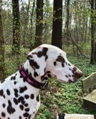 Hundehalsband-Leder-und-Stein_Noia_1