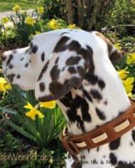 Hundehalsband-Leder-und-Stein_Noia_gold_2