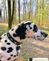 Hundehalsband-Leder-und-Stein_Vasco_1