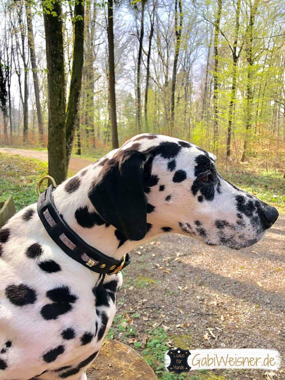 Hundehalsband Leder Fettleder doppelt gelegt